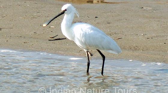 bird-large
