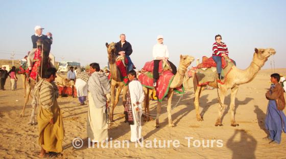 camel_safari_desert