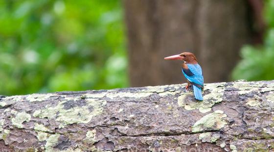 corbett_bird-small