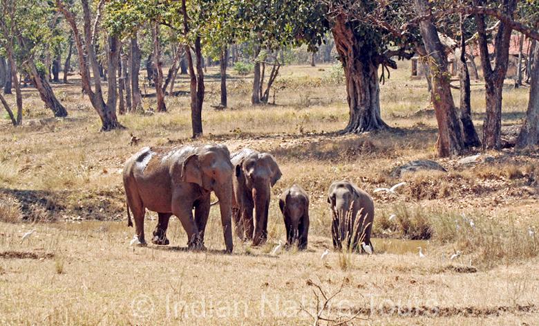 elephant-big