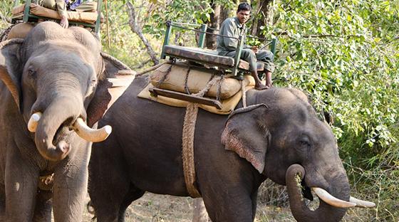 elephant-safari-s