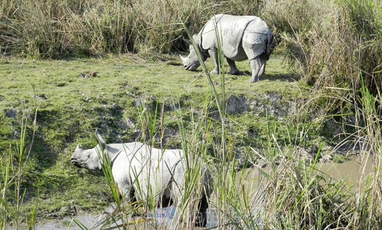 rhino_kaziranga-big