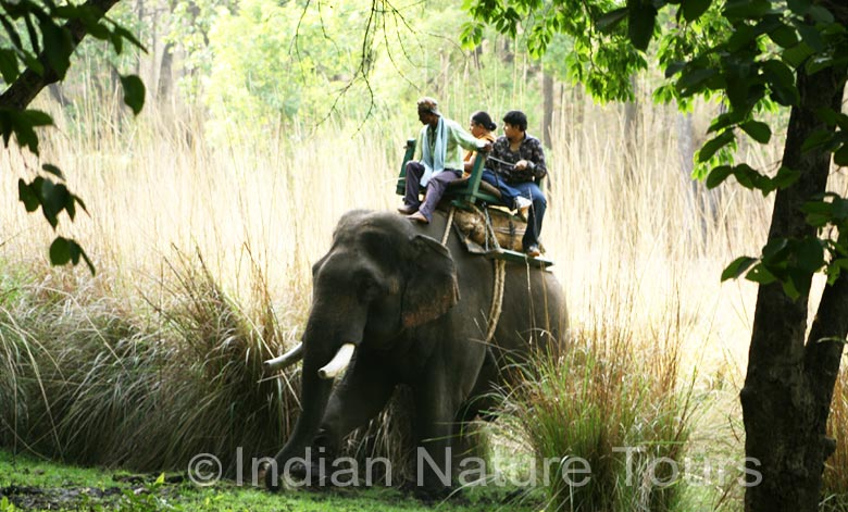 elephant  bandhavgarh