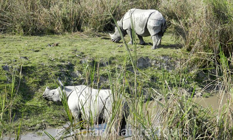 rhino-kaziranga-big